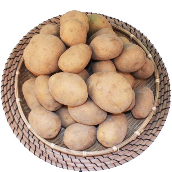 강원도 유기농 감자 5Kg
